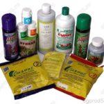 Биогумус — безопасный и эффективный способ повышения урожайности или здоровья растений