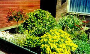 Как сделать голландский сад