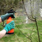 Обработка кустарников весной