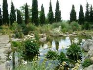 Сад и пруд