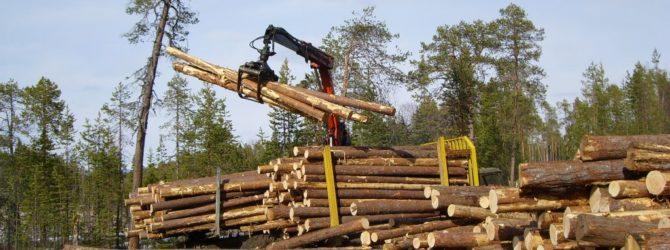 Заготовка дров или как законно собирать дрова
