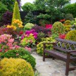 Кустарниковые растения на вашем участке: красиво, просто, долговечно